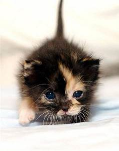 Paws For Pets | kittys! | Pinterest