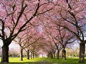 Rosa Blühende Bäume April : alleen gr ne tunnel mit geschichte gartenzauber ~ Michelbontemps.com Haus und Dekorationen
