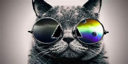 Cool Cat Cats Desktop Google Wallpapers Amazing
