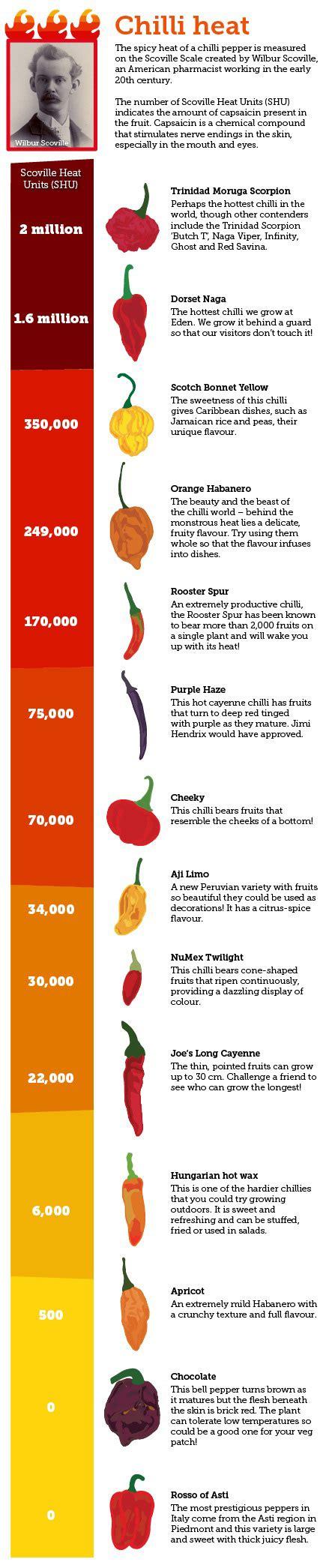 measuring chilli heat   scoville scale eden