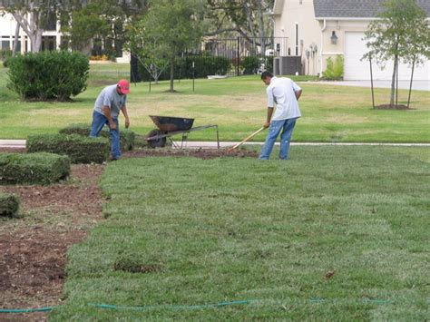 putting in a new lawn turfgrass sod installation tips pearland sugar land houston