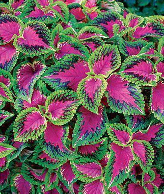 25 best ideas about shade garden plants on