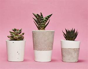 white concrete plant pot with cactus or succulent by hi ...