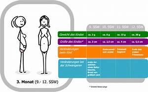 Schwangerschaft Wochen Monate Berechnen : 11 schwangerschaftswoche 11 ssw f tus fetus beginn der fetalzeit nackenfaltenmessung ~ Themetempest.com Abrechnung