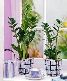 Büropflanzen Wenig Licht 7 Pflegeleichte Zimmerpflanzen Die Wenig