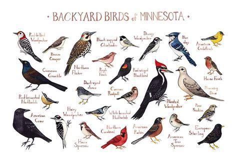 minnesota backyard birds field guide art print
