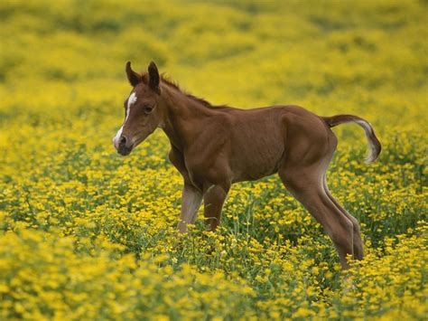 horse baby horses colt wallpapers animals hd yellow animal adorable lab cute babyhorse comics dark puppies everything foal pony mare