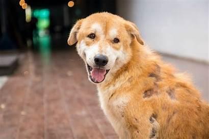 Dog Skin Severe Treating Allergies Allergic Reaction