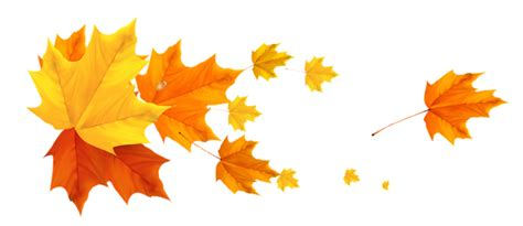 deco fall leafs png clipart picture gallery yopriceville