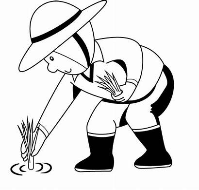 Rice Clipart Plant Planting Paddy Pages Sketch