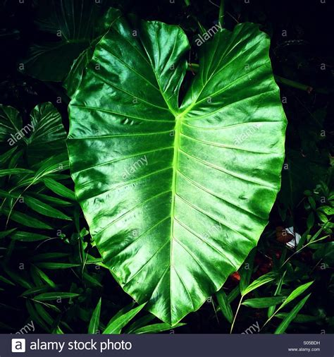It's A Photo Of A Fresh Large Leaf From A Tropical Plant