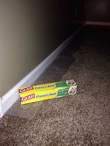 Protect Carpet With Peel And Stick Plastic Wrap When