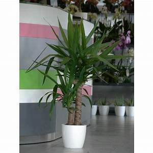 Pot Pour Plante Intérieur : plante d int rieur yucca photos de magnolisafleur ~ Melissatoandfro.com Idées de Décoration