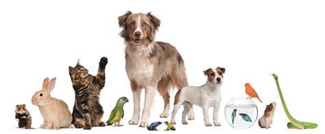 Svp Arizona » Partners And Their Pets