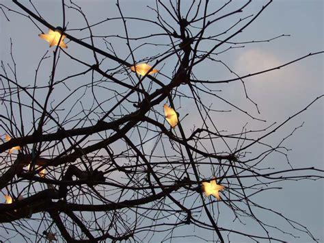 Weihnachtsbaum Ohne Nadeln by Weihnachtsbaum Ohne Nadeln Bild Foto Joachim