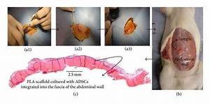 Animal Surgical Procedure   A1  Skin Incision And Flaps Of