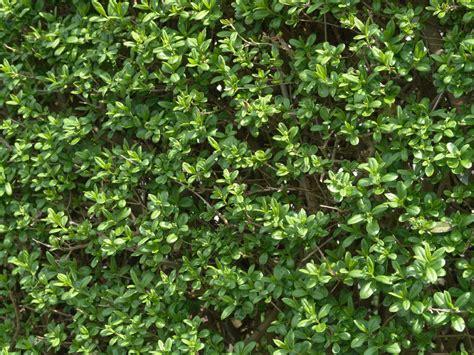 Garten Sichtschutz Erlaubt by Sichtschutz Im Kleingarten Erlaubt Verschiedene Ideen