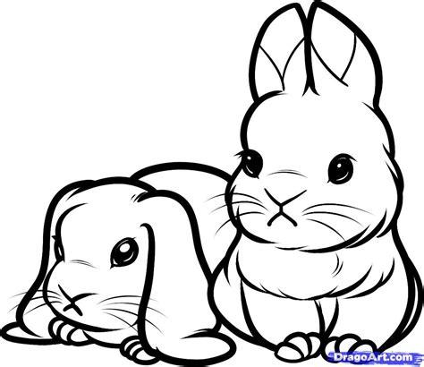 Drawn Bunny Baby Bunny Pencil And In Color Drawn Bunny