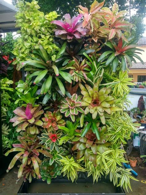 How To Plant Vertical Garden by 25 Best Ideas About Vertical Garden Wall On