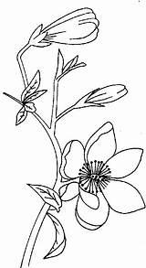 Magnolia Coloring Magnolias Fleur Et Pages Printable Getcolorings Enregistree Depuis Coloriage sketch template