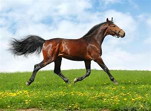 What is Galloping? (with pictures)