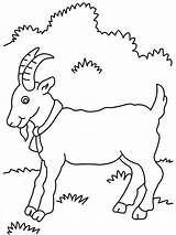 Goat Coloring Pages Goats Billy Three Gruff Printable Cute Preschool Baby Print Animal Printables Drawing Mountain Animals Outline Farm Procoloring sketch template