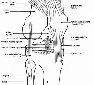 Knee Parts Diagram, Knee, Get Free Image About Wiring Diagram