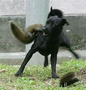 Squirrel s dog Hero squirrel saves baby eaten dog