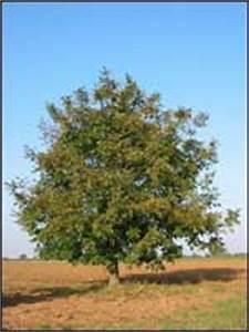 Keltisches Horoskop Berechnen : nussbaum baumhoroskop 4you ~ Themetempest.com Abrechnung