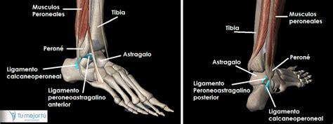 Magnífico Nombre Hueso Del Tobillo Motivo - Anatomía de ...