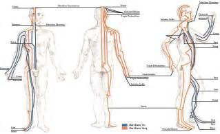 Comment Utiliser Le Tapis D Acupuncture by Comment Utiliser Vos M 233 Ridiens Pour Traiter La Fatigue