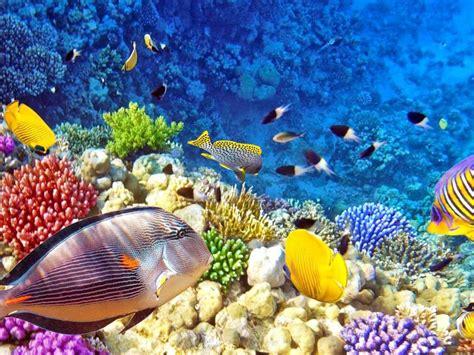 raja ampat underwater photo tropical colorful fish coral