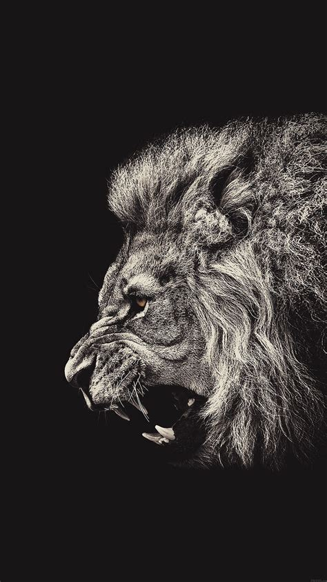 male lion portrait iphone   hd wallpaper mactrast