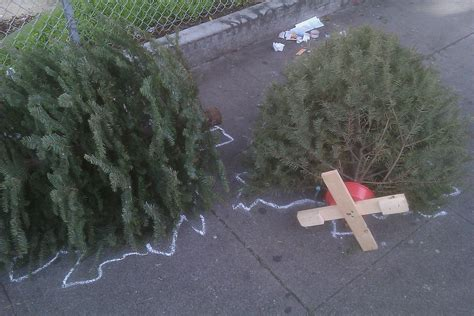 my christmas tree died file dead trees with chalk outlines jpg wikimedia commons