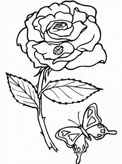 Coloring Pages Printable Roses Rose