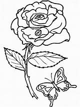 Coloring Pages Printable Rose Roses sketch template