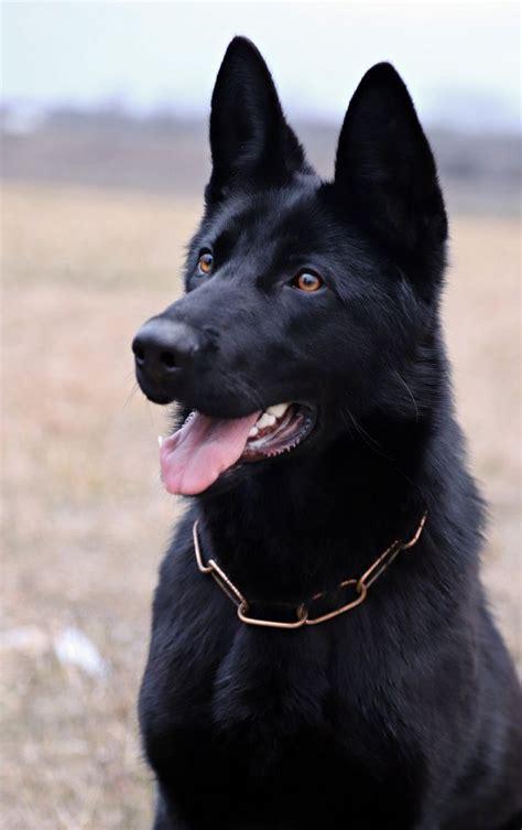sindrome del perro negro por  el color de la piel