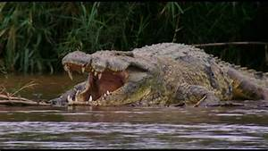 Gustave Crocodile National Geographic