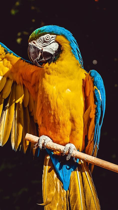 Bird wallpapers for 4k, 1080p hd and 720p hd resolutions and are best suited for desktops, android phones, tablets, ps4 wallpapers. Animal / Blue-and-yellow Macaw (1080x1920) Mobile Wallpaper | Macaw, Animals, Wallpaper