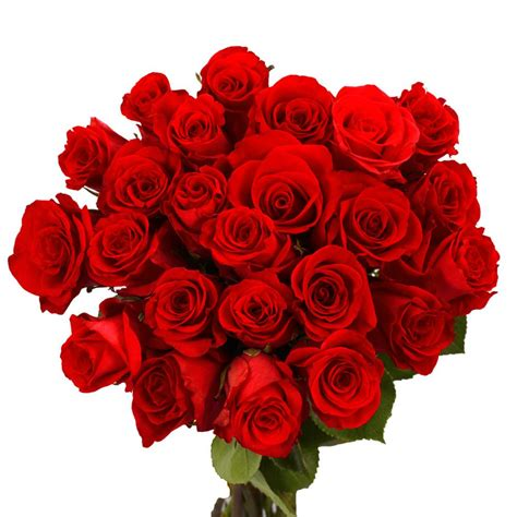Globalrose Fresh Red Valentine´s Day Roses (50 Stems)-50 ...