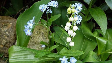 Bärlauch Pflanzen Und Erkennen
