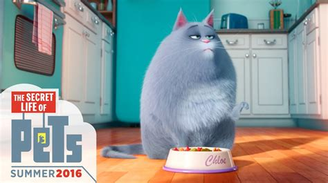What happens with our pets when we're not home? The Secret Life of Pets Trailer (2016)