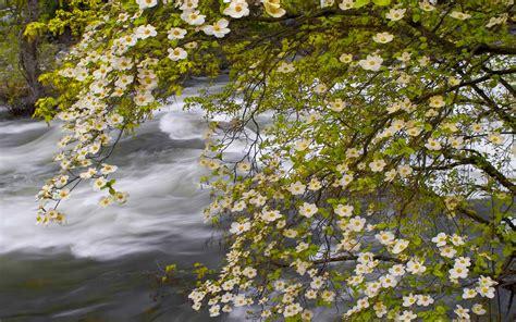 spring landscape merced river yosemite national park