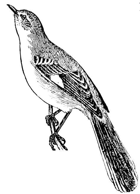 mockingbird clipart