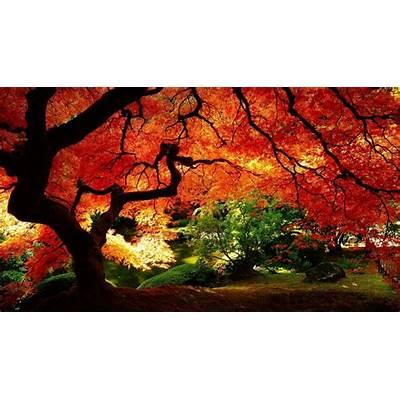 Beautiful Natural SceneBeautiful Cool Wallpapers