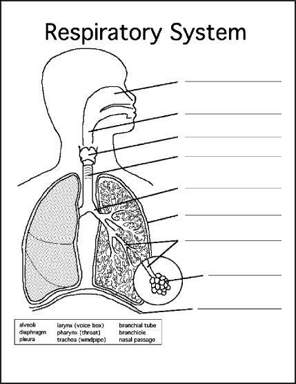chsh  respiratory system teaching resources
