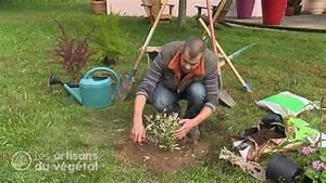 Comment Planter Un Camélia : comment planter vos arbres arbustes et haies youtube ~ Melissatoandfro.com Idées de Décoration