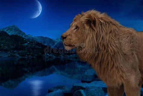 respiro  saggezza del leone vicino alla cellula blu