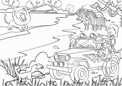 Safari Coloring Jungle Pages African Clipart Drawing