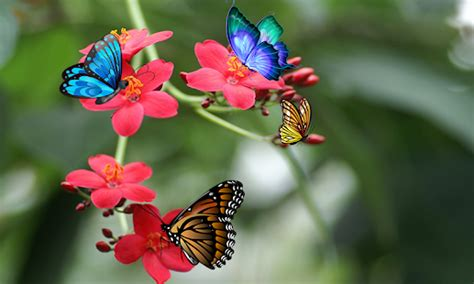 Butterfly Home Screen Wallpaper Images by 3d Butterfly Live Wallpaper Android Apps On Play